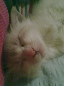 Grișu dormind