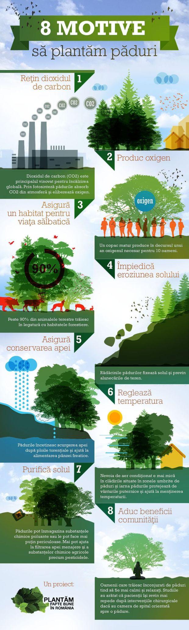 Mai Mult Verde - Infografic utilitate păduri