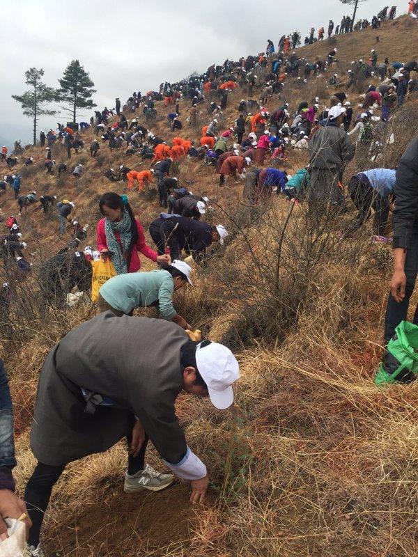 Plantare de copaci în Bhutan